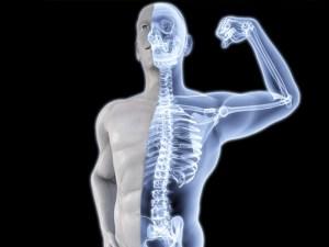يبلغ عدد العظام في جسم الانسان 206 عظم وبالتالي فإن نسبة العظام المكونة للعمود الفقري تساوي