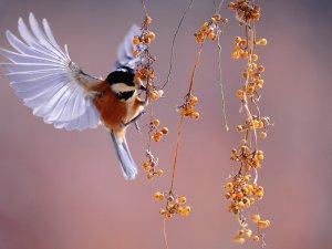 معنى كلمة فرخ هو ولد الطائر