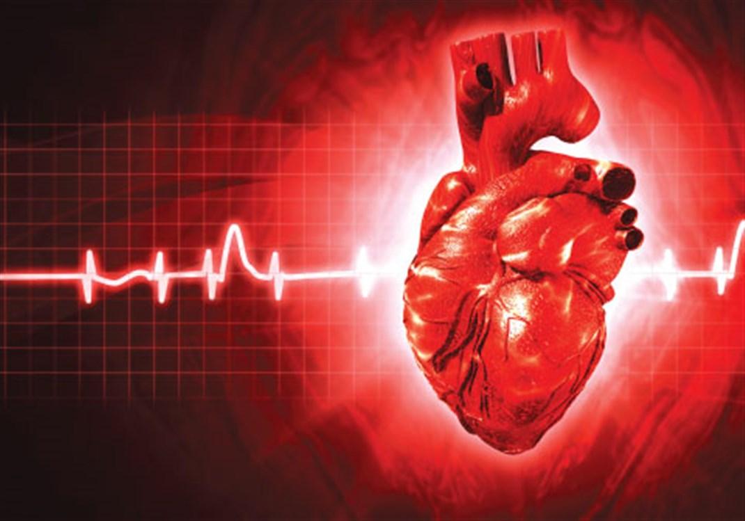 كيف يضخ القلب الدم