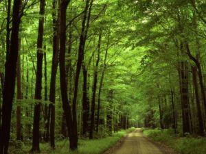 فسر كيف يمكن ان يؤثر عدد اشجار الغابة