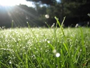 بوستات عن المطر خواطر وأشعار عن تساقط المطر
