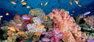 Fiji's coral reefs to be protected by new policy
