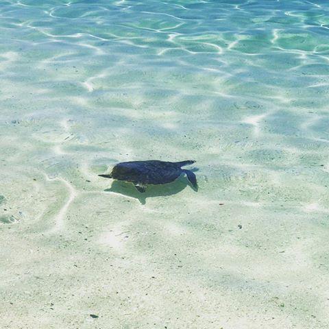 Hefty penalties for breach of turtle regulations!