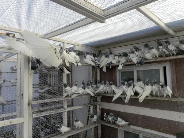 A pigeon coop in Brooklyn (Photo: Mohsin Zaheer)