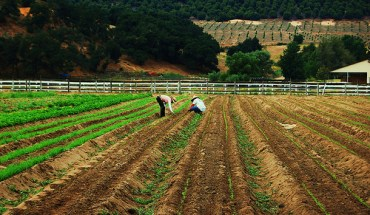 Farm workers in California - Photo: leadenhall/flickr