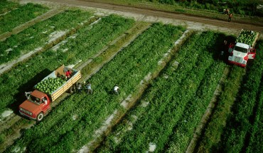 Farm workers in Florida
