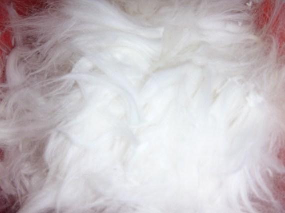 P1000559 fluffy fiber