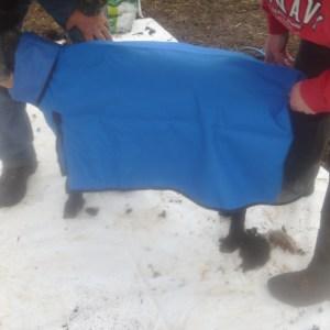 P1010158 coat on pinky