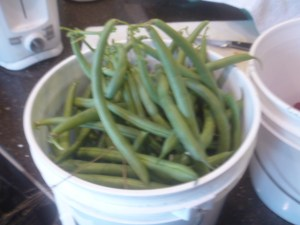 P1020267 2 gallon green beans