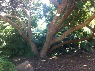 cool tree in the Botanical Gardens