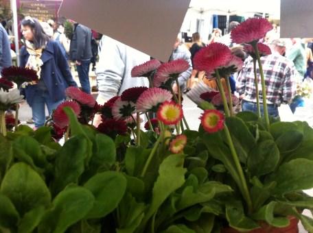 columbia rd flowers