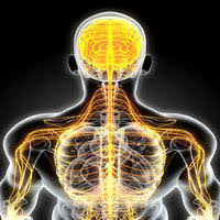 Small Nerve Fiber Study Finds Different Kinds of Fibromyalgia Exist