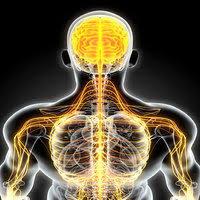 Small Nerve Fiber Study Finds Different Kinds of Fibromyalgia Exist