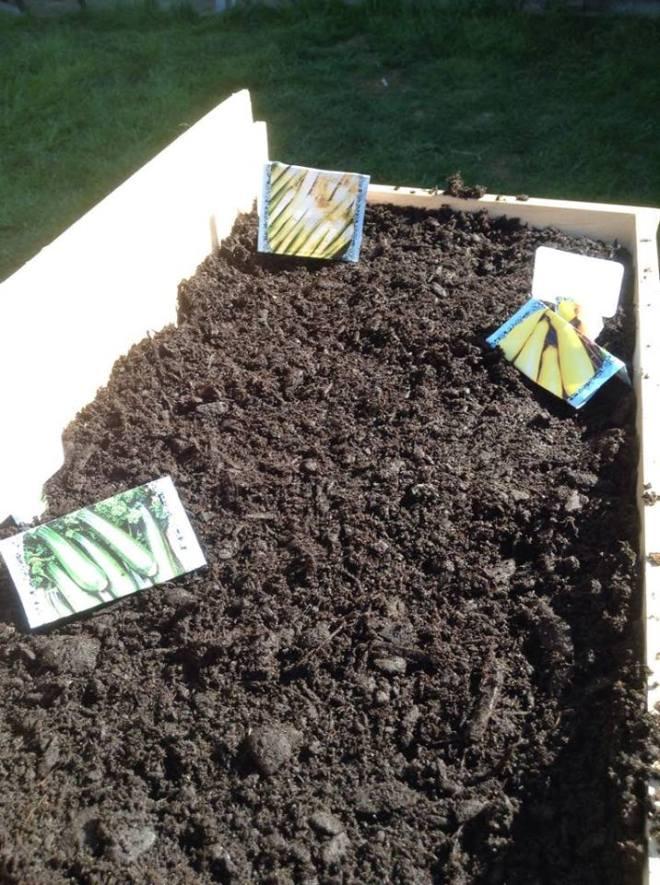 Mmmm growing veggies