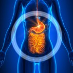 Fibromyalgia and Gut Health continued