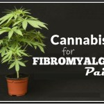 Cannabis for Fibromyalgia