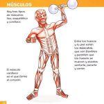 Ficha de los músculos para niños