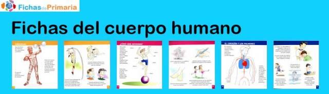 fichas-del-cuerpo-humano-para-primaria