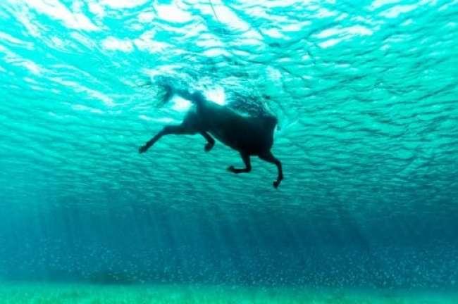 A horse in the ocean