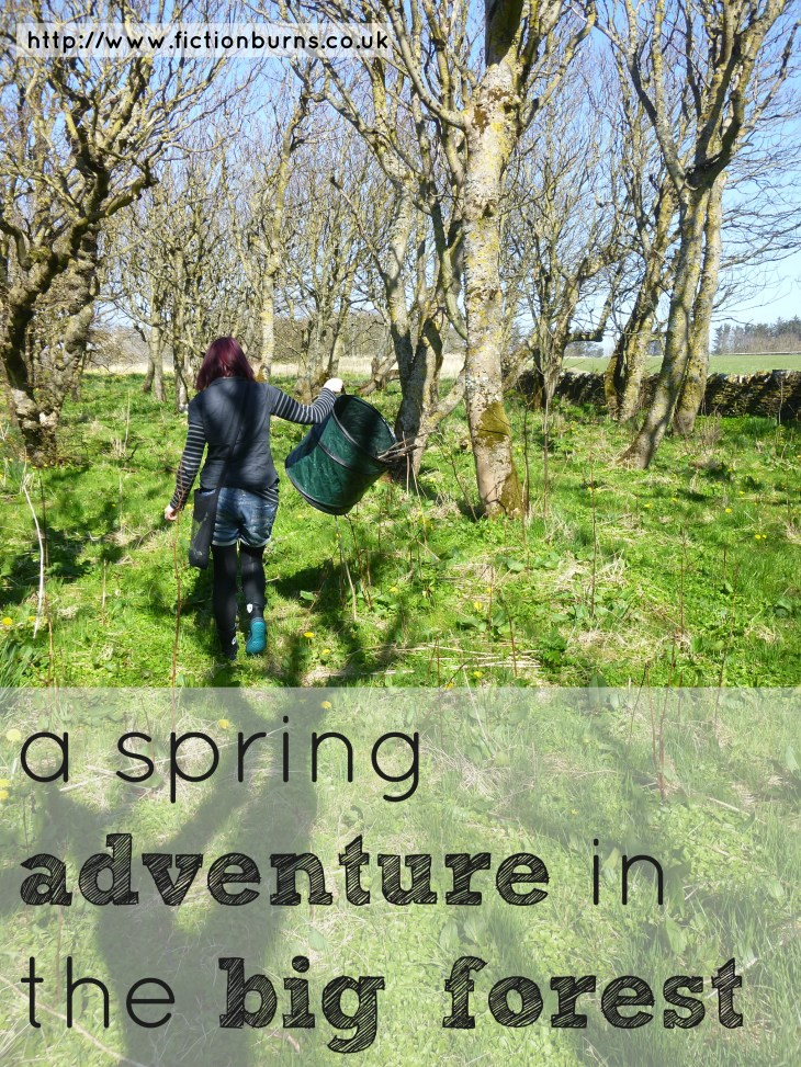 a spring adventure in the big forest
