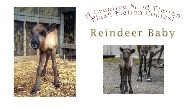 Christmas Writing Prompt: December 11 - December 18, 2019 Reindeer Baby