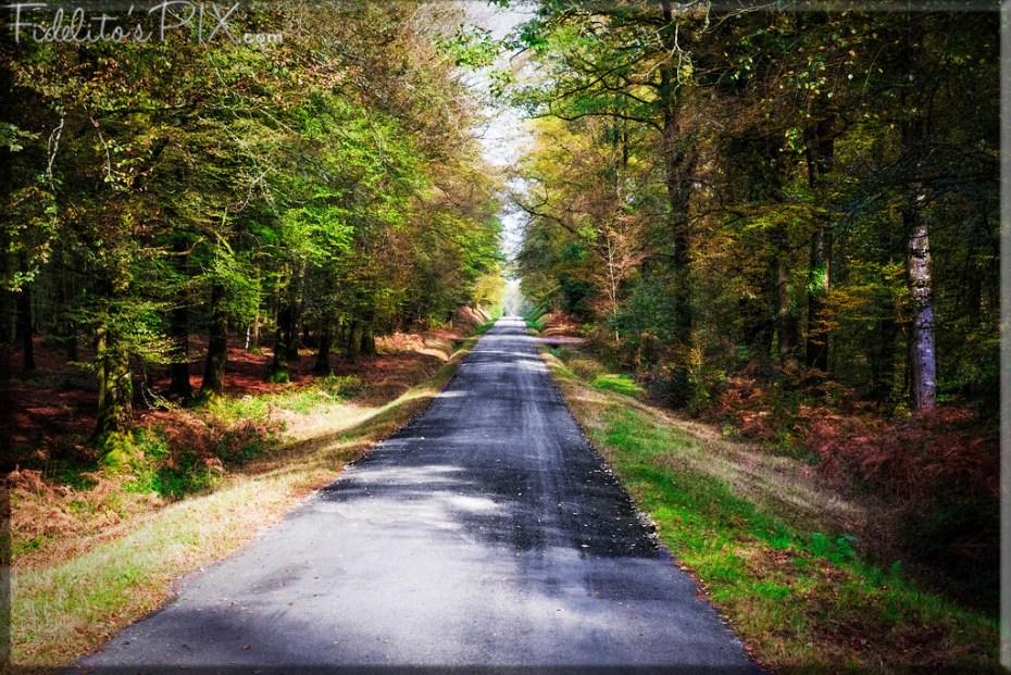 Pathways - s2_D75_3151-XL copy