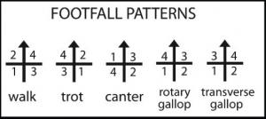 k9footfall-patterns