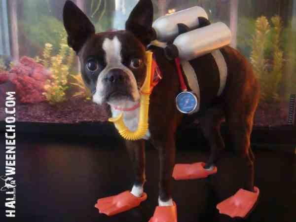Dog Halloween Photo Contest Winners 2015 Edition Fidose