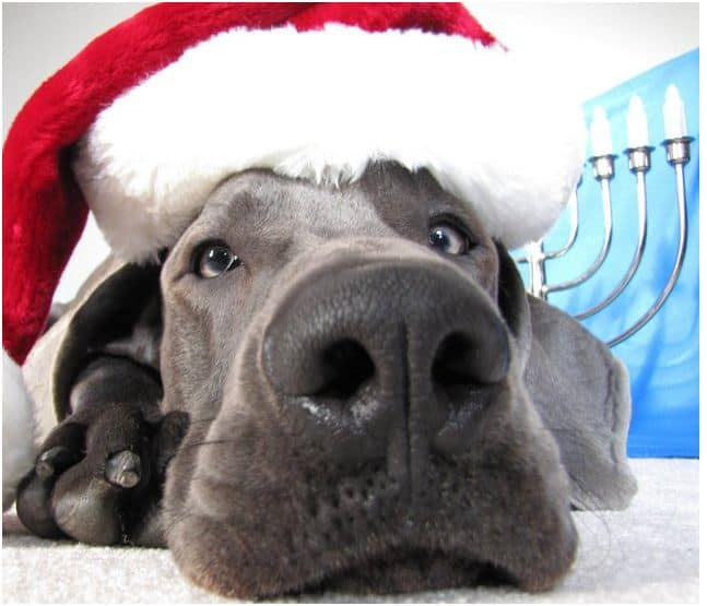 The 50 Best Dog Holiday Card Ideas Fidose Of Reality