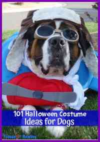 100 Halloween Costume Ideas for Dogs - Fidose of Reality