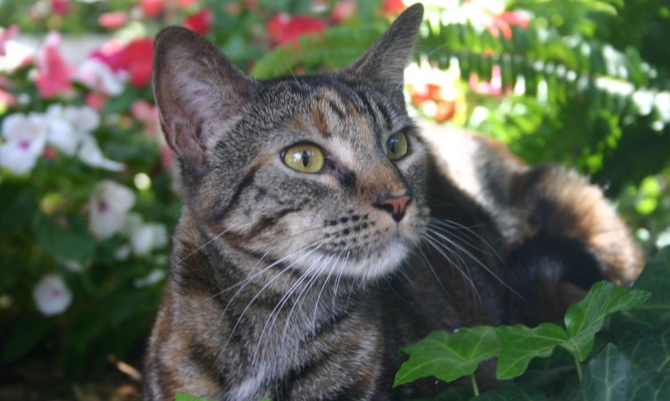 City of Lincoln Spay/Neuter Assistance Program (SNAP) Grant