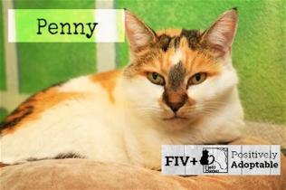 fiv-penny_600x400