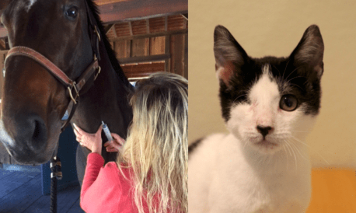 Bravo, Logan! 1-lb Kitten's Eye Helped by a 1,200-lb Horse