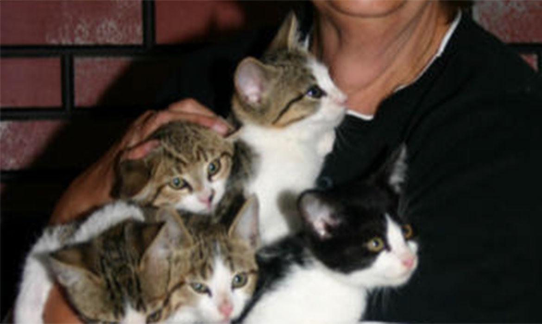 A Feral Kitten Story