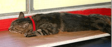 """The """"kitty thermometer"""" records the temperature that day as """"HOT."""""""