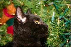 Kricket - Kricket's kitten curiosity at work.