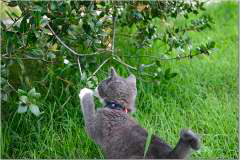 newsletter-spring-2006-snap-4_240x160