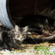 Camp Fire Cats Adjust at a Real Camp: Camp Joe Willie