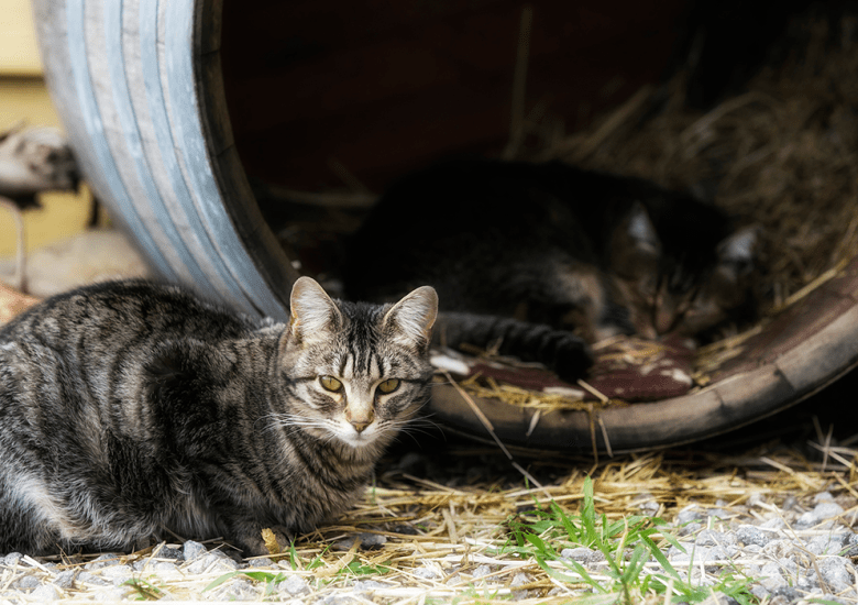 Feral cats at 2nd Chance Ranch.