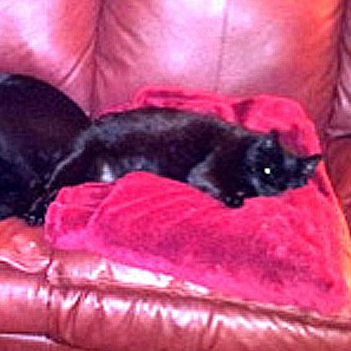 Adoption success story Amanda laying down on a pink blanket