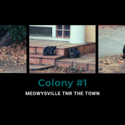 With your support, nearly 500 cats have been TNR'd in Marysville