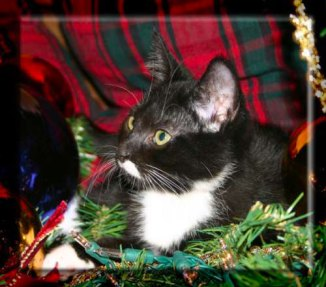 A black and white kitten in a Christmas garland.
