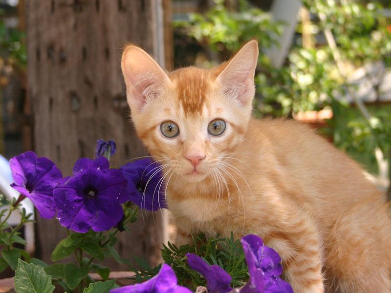 An orange kitten rescued from Project Orange.
