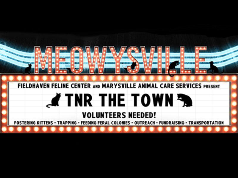 Meowysville: TNR the Town