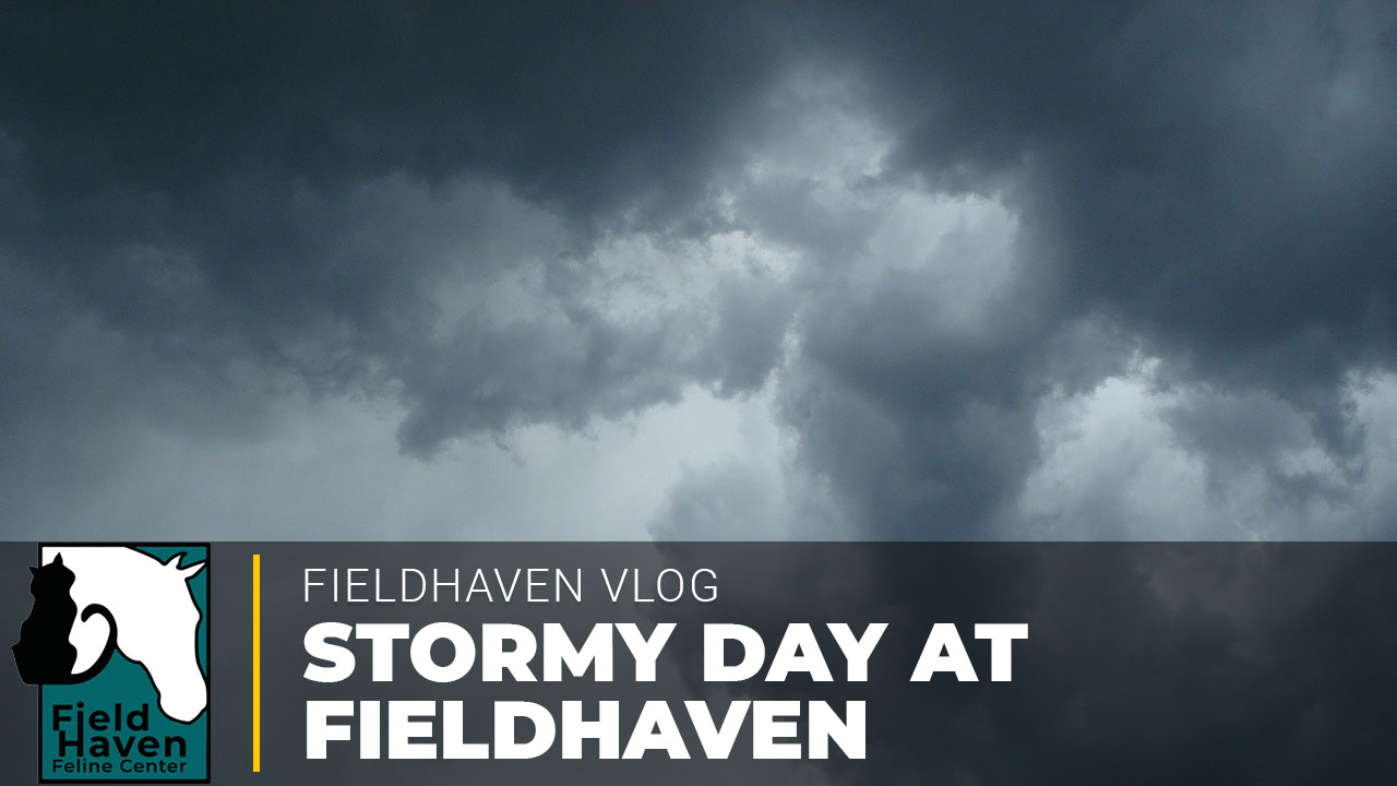 Stormy Day at FieldHaven – Part 1