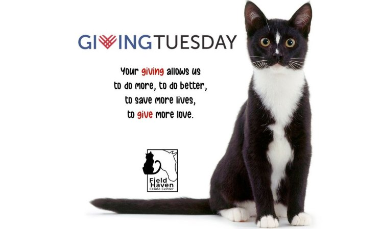 Giving Tuesday: Your giving allows us to do more, to do better, to save more lives, to give more love.