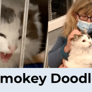 12 Saves of Christmas – Smokey Doodle – FieldHaven's Heartwarming Save #12
