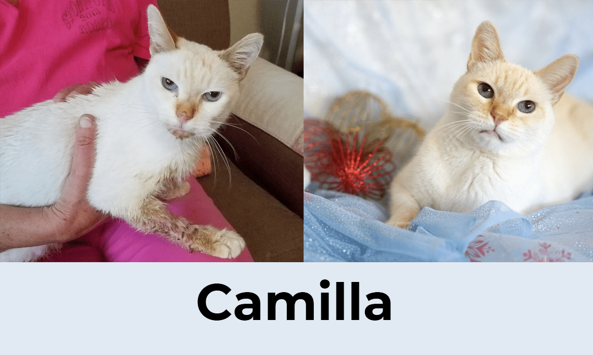 12 Saves of Christmas – Camilla – FieldHaven's Heartwarming Save #9