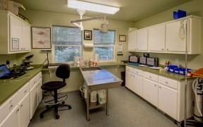 An interior view of FieldHaven Feline Center's infirmary and medical suite.