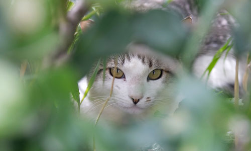 A cat hiding in the bushes.